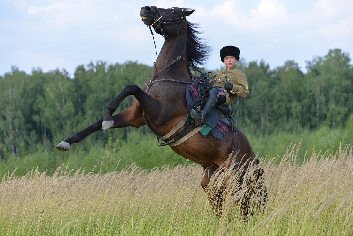 набор картинка казака на коне можно
